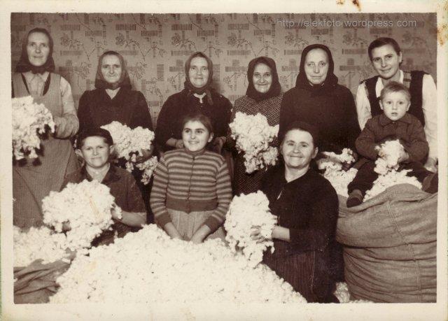 Gyapotválogatás az első József Attila T.Sz.Cs.-ben 1949-1950 telén. A képen látható: Lustyikné, Bottóné, Szőkéné, Tóthné, Vargáné, Dobiné kisfiával, Dobi Imrével, ? Jóska, Bottó Mária, Szecsenkóné.