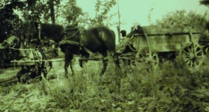 Szüreti lovaskocsi